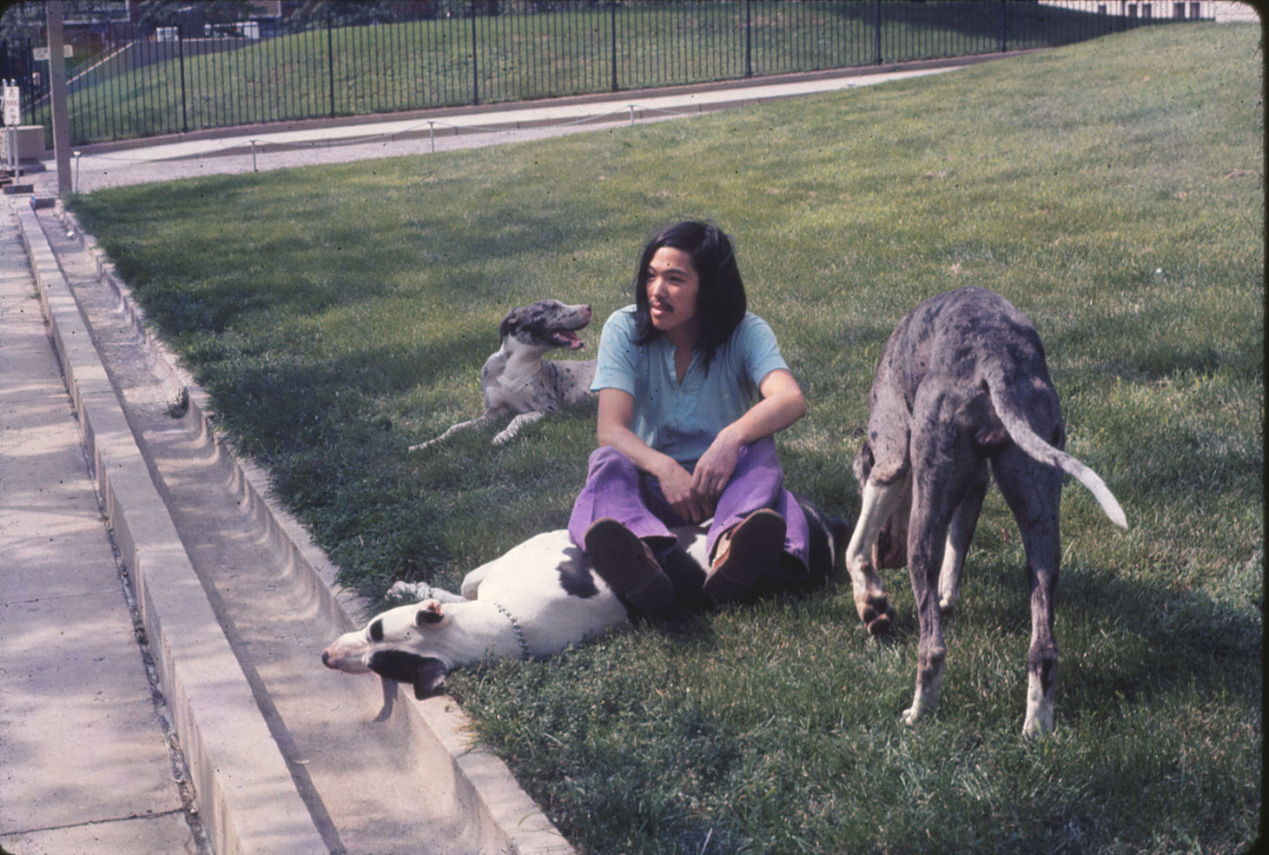 1973  Houston and Wooster on NYU grass Barney with the great danes Iko, Harlot, and Earth